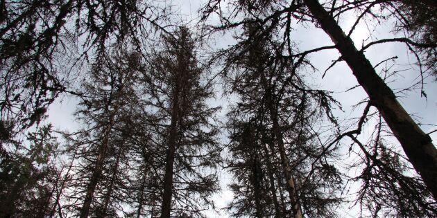 Nu ska skogarna klimatanpassas – i hela Sverige