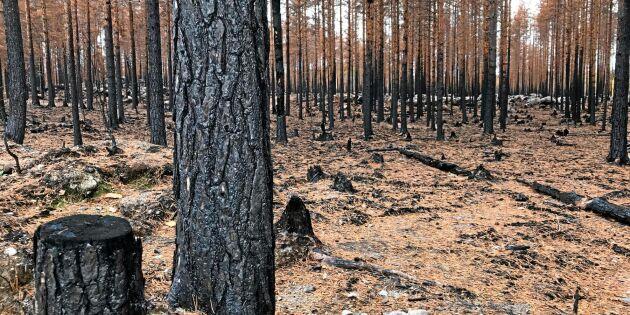 Branddrabbade skogsägare får mer betalt