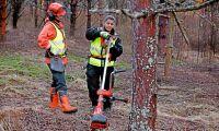 Jämställdhet i skogen granskas