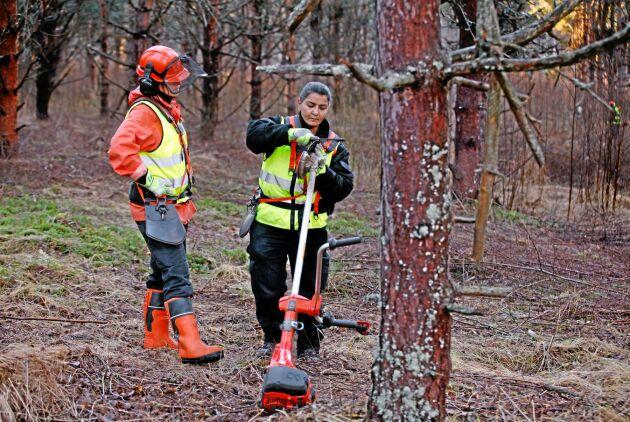 Skogsstyrelsen har fått i uppdrag att utreda jämställdheten i skogssektorn.