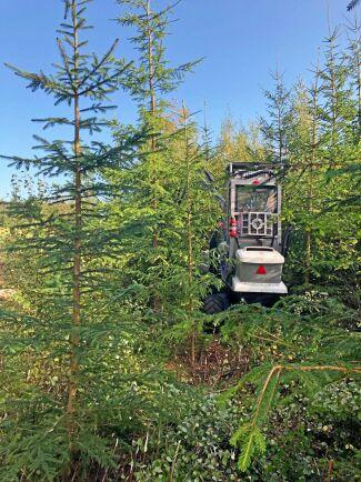Vid maskindemonstrationen kunde besökarna se att det går att röja i vanlig ungskog med maskin.
