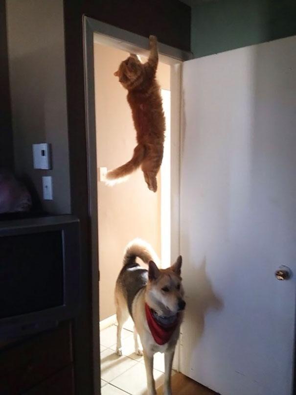 katt03
