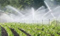 Trots vattenbrist – ok vattna djuren
