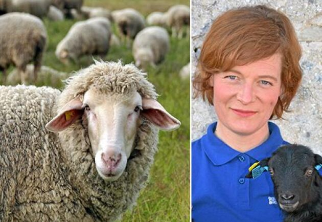 Det är dags att tänka mer på smittskydd i fårbranschen, anser ATL:s krönikör Ebba Schwan.