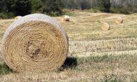 Fräcka tjuvar skördade och stal ett helt fält med hö