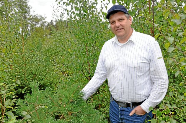 Erik Sandberg har märkt att tallar som växer i skuggan av sly smakar bättre för viltet. Om tallen däremot växer fritt är den inte lika smakrik.