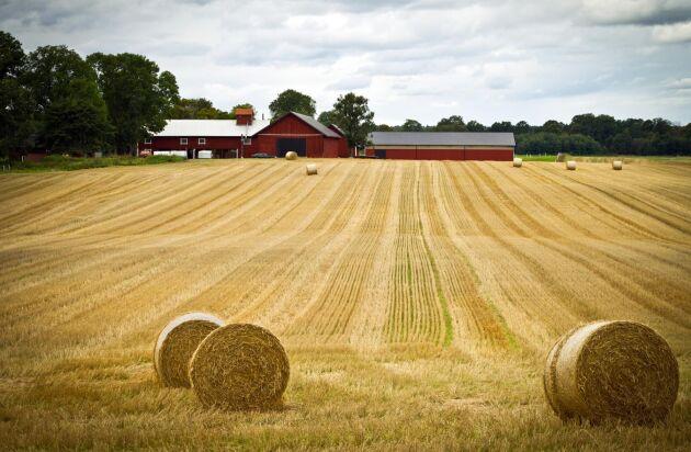Lantbrukaren Tina Rudolphson vill ha svar på om stödpengarna till lantbruket efter sommarens torka kommer att kunna betalas ut år.