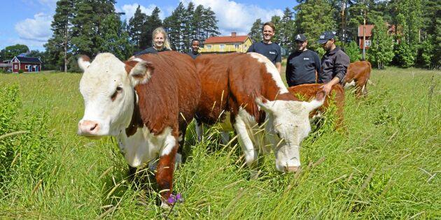 Svårt för kommun att hitta kött – köpte egna djur