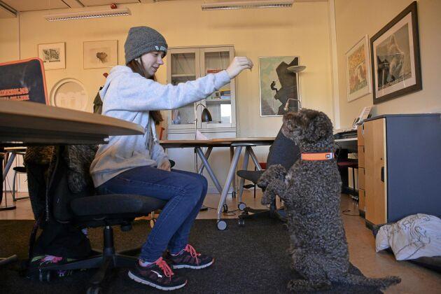 Sitta bamse. Linnea Ljunggren, 17, och Viggo showar för kameran. – Hundarna är anledningen till att jag går hit varje dag, säger Linnea Ljunggren.