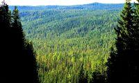 Skogsägarens kärlek erkänns inte