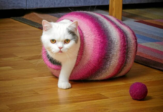 Liten kula och liten matchande boll till katten.