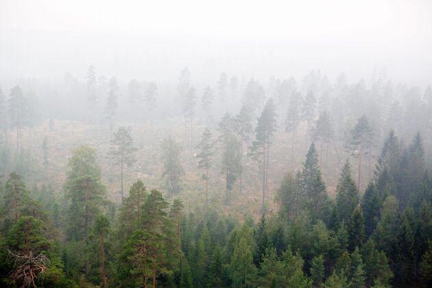 Enligt SMHI råder det lokalt stor risk för skogsbränder på flera håll i landet.
