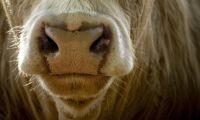 Lantbrukare åtalas för djurplågeri