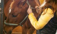 Satsar på HVB-hem med hästar