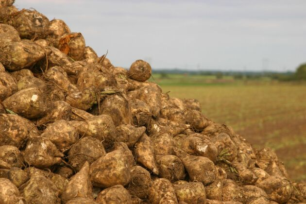 Betodlare får inte använda utsäde behandlat med växtskyddsmedlet Gaucho WS70.