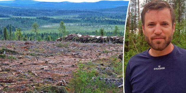 Sveaskog tvingas avverka stora contortabestånd i förtid