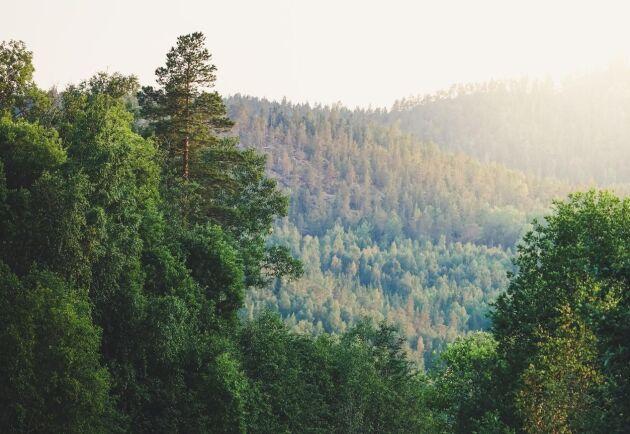 Största certifierade produktiva skogsmarksareal återfinns i Västerbottens län.