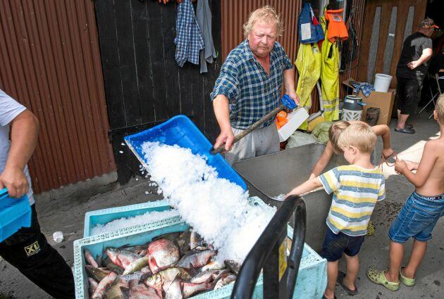 Pappa Conny skyfflar snabbt ett islager över den nyfångade gösen. Barnbarnet Sebastian och hans kompis tittar på.
