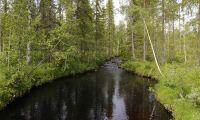Svårt få skogsägare att samarbeta i vattenfrågor