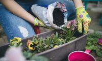 Varannan svensk vill jobba inom gröna näringar
