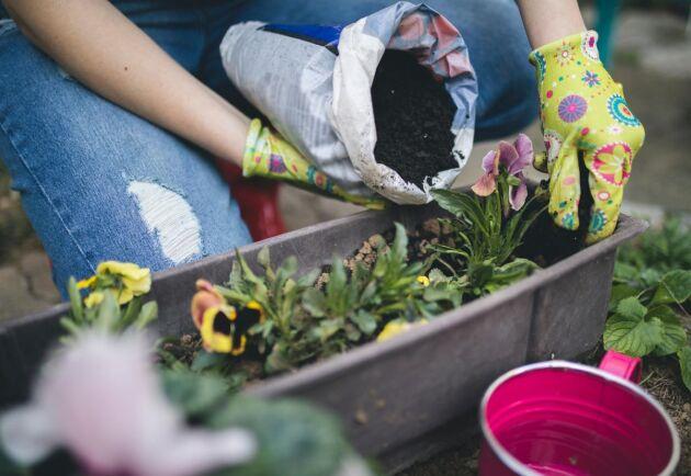 55 procent av de tillfrågade skulle kunna tänka sig att jobba inom gröna näringar.