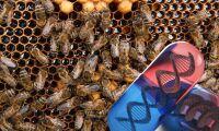 Så ska Monsanto rädda världens bin