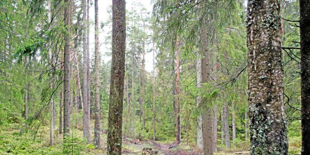 Mer hyggesfritt i statens skogar