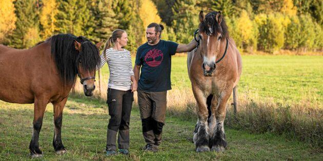 De ger älskade hästar ett värdigt slut
