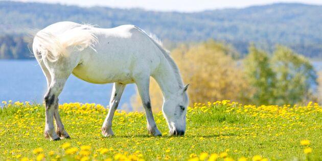 Nytt fågelvirus som kan göra hästar sjuka har spridits till Tyskland