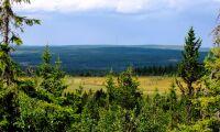 """""""Orimligt att skydda hela den fjällnära skogen"""""""