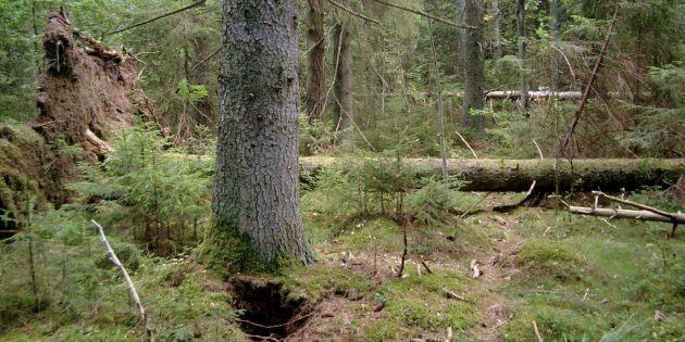 Sju av tio skogsägare är nöjda med avtalet