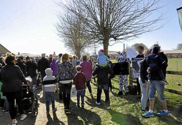 I samband med ett kosläpp i Skurup förra våren dök Djurrättsalliansen upp för att protestera mot mjölkindustrin.