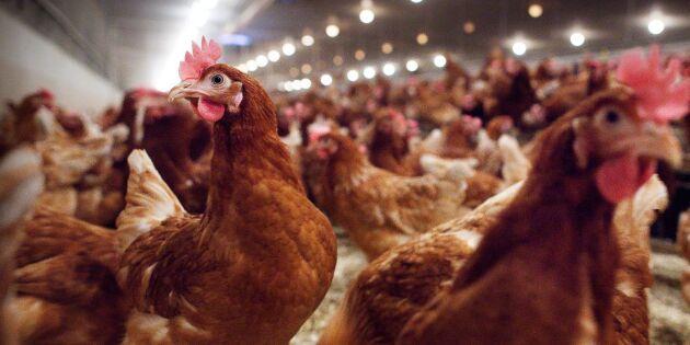 Åtal om misstänkt djurplågeri nedlagt