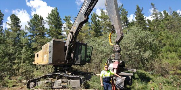 Sug efter svenska skogsarbetare down under