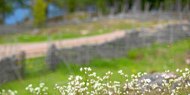 Mandelblom – en riktig mjukis med stenhårt rykte