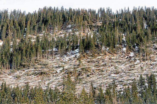 Stormskadad skog i Italien.