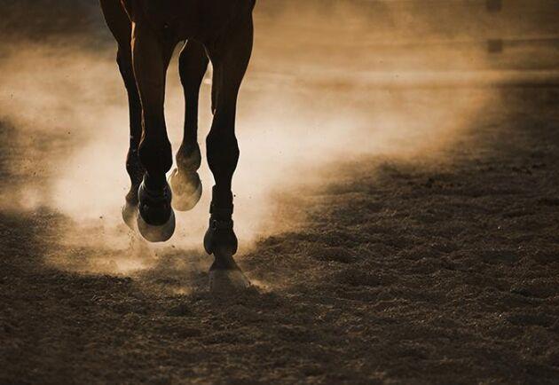 Tre hästföretagare har på kort tid stoppats att utöva sin verksamhet av myndigheterna. En av dem har dessutom fått djurförbud och måste göra sig av med hästarna.