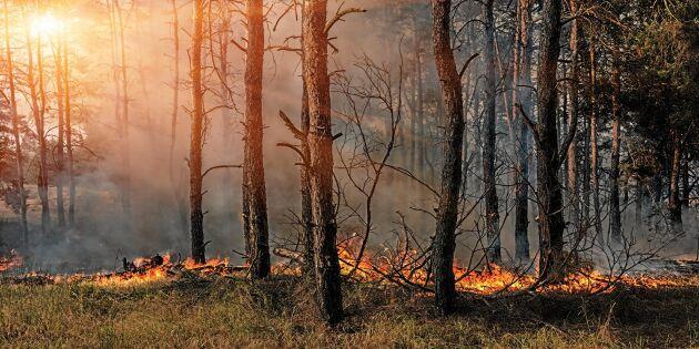 Flera bränder misstänks vara anlagda i Värmland