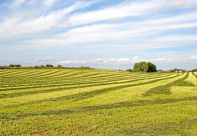 Reserverna hos många lantbrukare är i många fall i det närmaste obefintliga efter torkan 2018 och man kommer att ligga på gränsen även efter ett bra år.