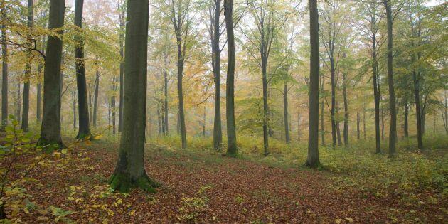 Så mycket skog får du för tre miljoner