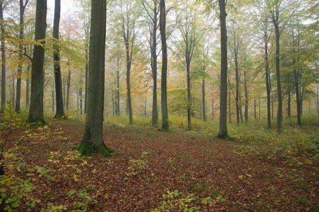 Skog i södra Sverige.