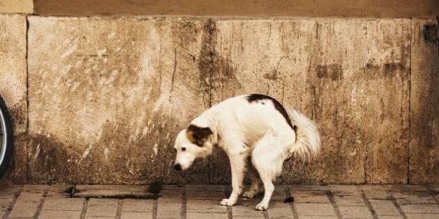 Dna-test kan stoppa hundbajs på gatan