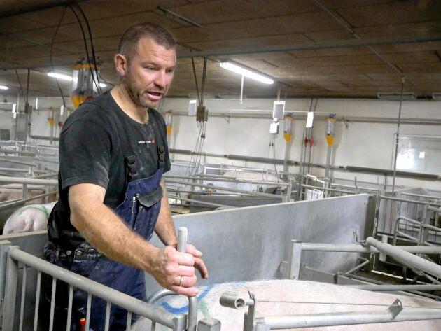 Jonas Würtz vill bygga för lösgående produktion när stallet renoveras och byggs till. Han hoppas att det höga grispriset håller i sig och han vill bygga ut i etapper.