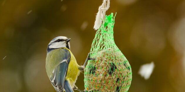 Ny forskning: Ska vi mata fåglarna eller inte?