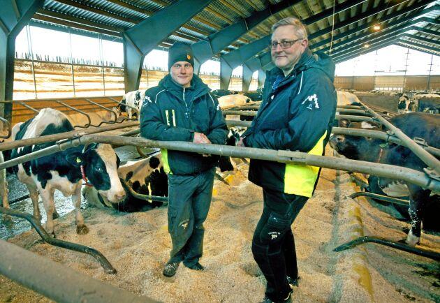 Mjölkbonden och nyblivne ledamoten i Arla Foods styrelse, Jan-Erik Hansson, till höger. Till vänster hans son Henrik Hansson.