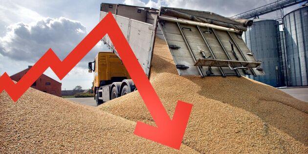 Prisryck kan ge snabb nedgång för spannmål