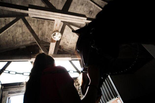 En veterinär dömde ut hästen på grund av en förändring i ryggen och köparen begärde ersättning av säljaren. Fotnot: För att skydda sitt företag vill näringsidkaren i fallet vara anonym.