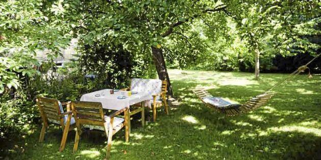 Bikarbonat – oväntade hjälpredan i trädgården