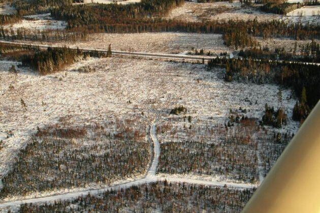 Ett 60-tal stora skogsägare i Norrland kräver att de som drabbades av stormarna Ivar och Dagmar ska få samma ekonomiska stöd som de som drabbades av Gudrun och förra årets skogsbrand i Västmanland fick. Bilden visar ett åretplanterat stormhygge fem år efter stormen Gudrun.