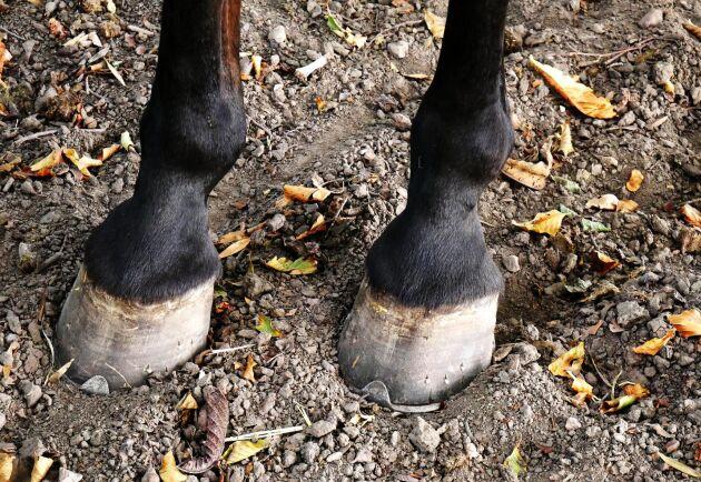 Den misstänkta personen ska utsatt flera hästar i Frankrike för knivattacker, och över tjugo hästar har tvingats avlivas. (Arkivbild.)